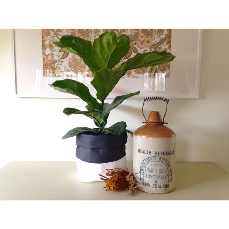 P L A N T  S A C K S   Washable paper plant sacks are the best! SHOP   www.daisychainstore.com.au  20% OFF SALE • CODE 'SALE20'