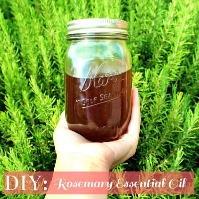DIY ROSEMARY ESSENTIAL OIL