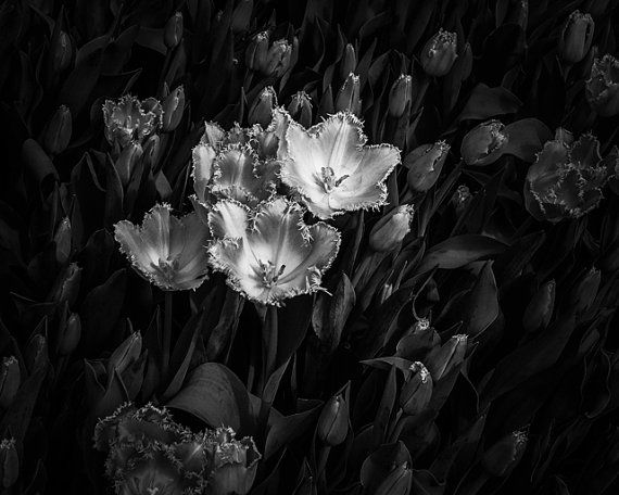 8x10 Black and White Print Beautiful Flowers Series by PelliculArt