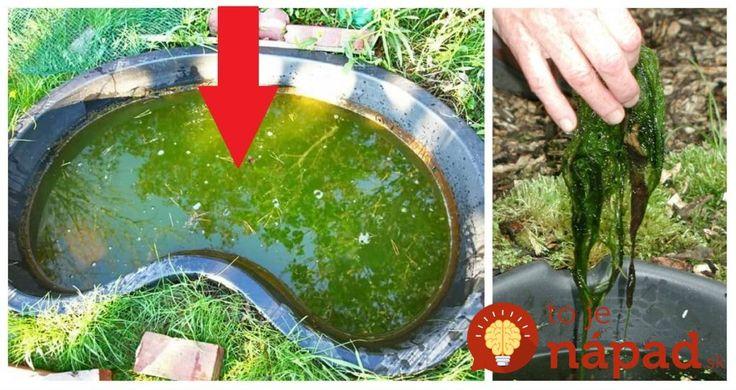 Perfektný tip, ako vyčistiť vodu v jazierku bez driny a chémie: Stačí, keď do jazierka vložíte túto vec a o riasy sa viac nemusíte starať!