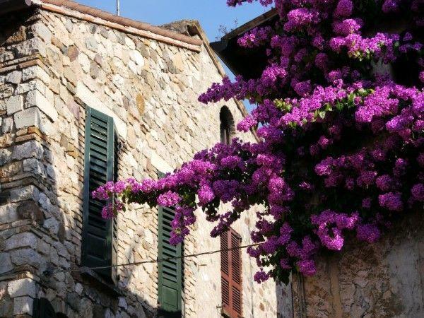Die 160 Besten Bilder Zu Mediterrane Pflanzen Auf Pinterest ... Exotische Pflanzen Garten Bougainvillea Drillingsblume