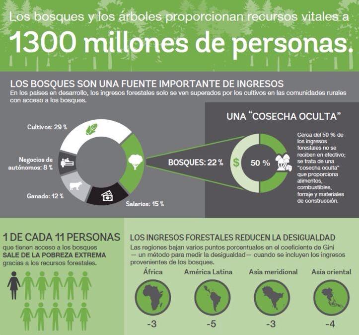 Infografía: importancia de los bosques para LA y el Caribe.