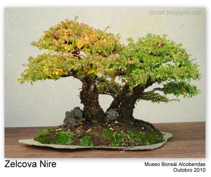 Gardens bonsai a collection of gardening ideas to try for Unusual bonsai creations