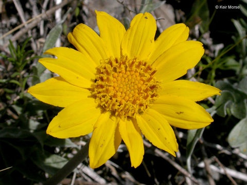 Boost your immune system naturally, using a few simple herbs. http://amzn.to/zin7x5
