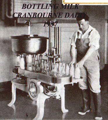 MP 15113. Tom Thomas bottling milk at Cranbourne Dairy in Darling Road East Malvern; 1937.