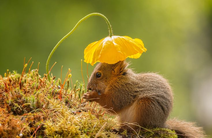 <em>Sun Head</em>. My garden has many flowers, and every day red squirrels come to visit. I am almost always ready to take some shots of these wonderful animals. Photographed by Geert Weggen in Bispgården, Sweden.