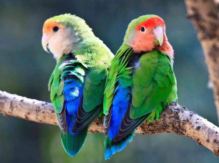 8 top lowmaintenance pet bird species in 2020 low