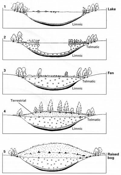 Lovely Lakes: Ecological Succession in Lake Biomes