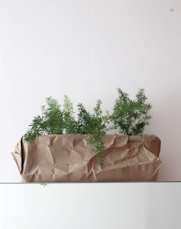 #asparagusfern #paperbag #plant #modernplants #indoorplant #styling by #placesandgraces