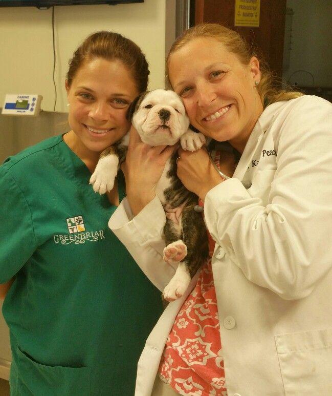Greenbriar Veterinary Hospital u0026 Luxury Pet Resort