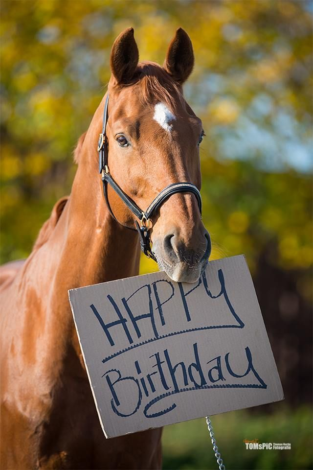 Even For Horses Horse Happy Birthday Image Happy Birthday Horse Happy Birthday Animals