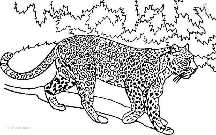 tijger dieren dag kleurplaten