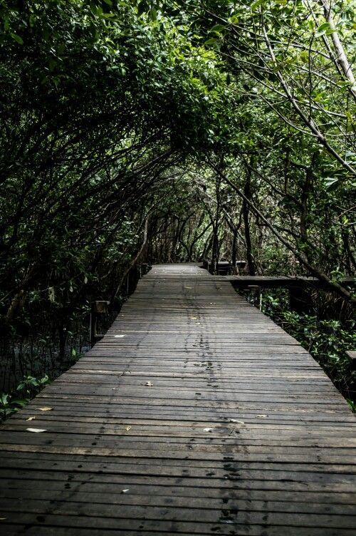 02_02_2014 Mangrove Eco-Garden