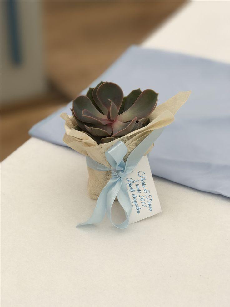 Succulents Giveaways Atelier Dual  #atelierdual