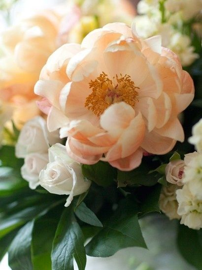 Peach Peonies With White Roses ~ By flowersgardenlove