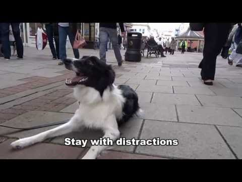 Jess - Border Collie - Residential Dog Training / Dog Boot Camp with Adolescent Dogs UK - YouTube