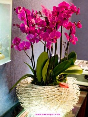 arreglos florales con orquídeas para enviar