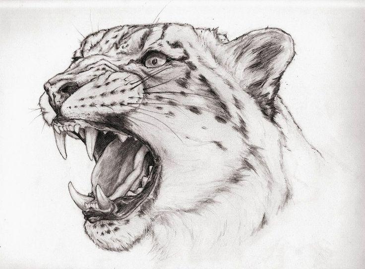 Картинки животных хищников карандаш
