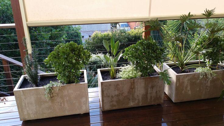 crassula, agave, euphorbia, dicondra