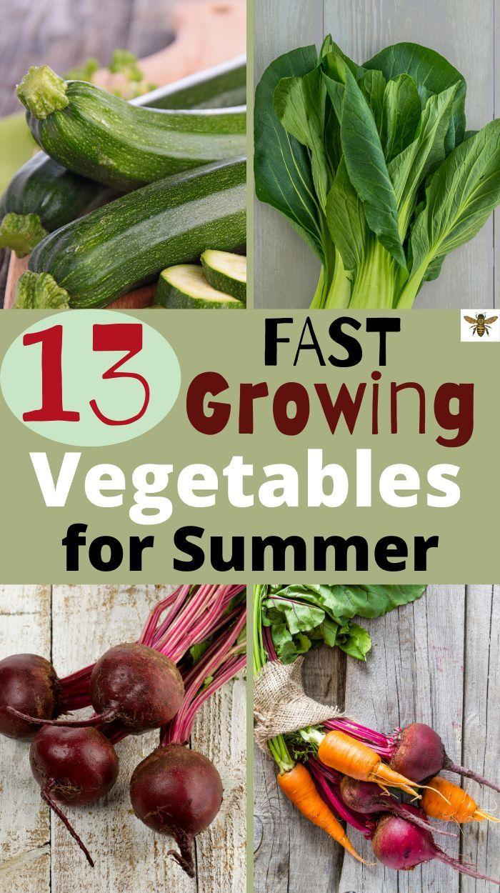 13 Fast Growing Vegetables For Summer Gently Sustainable In 2020 Growing Vegetables Fast Growing Vegetables Vegetables