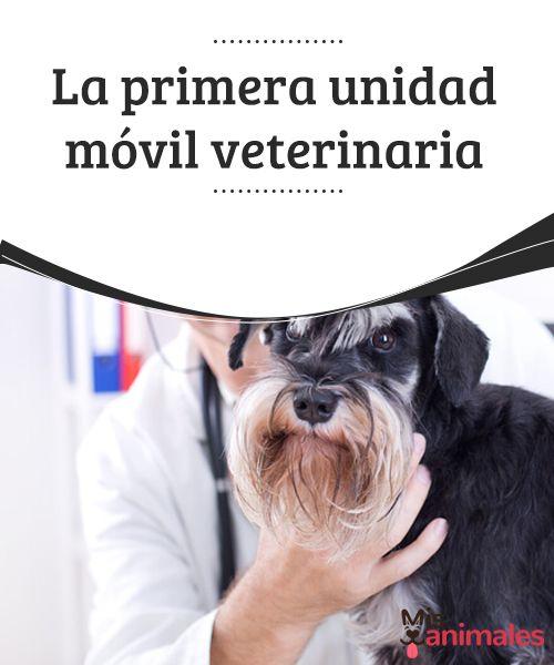 La primera unidad móvil veterinaria   Una unidad móvil veterinaria podría salvar la vida de tu mascota en una urgencia. En España se están implantando y te contamos todo sobre ello. #salud #unidad #móvil #veterinaria