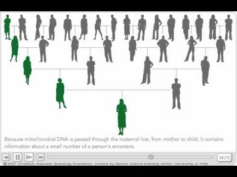 48 best Mitochondrial DNA images on Pinterest