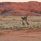 Two Kangaroos by darkydoors ...