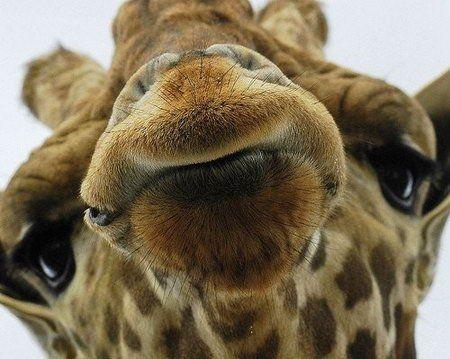 Srandovní obrázky, Funny fotky, stupidní obrázky, veselá obrázky, zábavné zvířata, kočky, psi, Funny obrázky