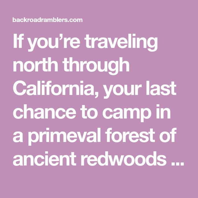 If you're traveling north through California, your last chance to camp in a primeval forest of ancient redwoods is in Jedediah Smith State Park.