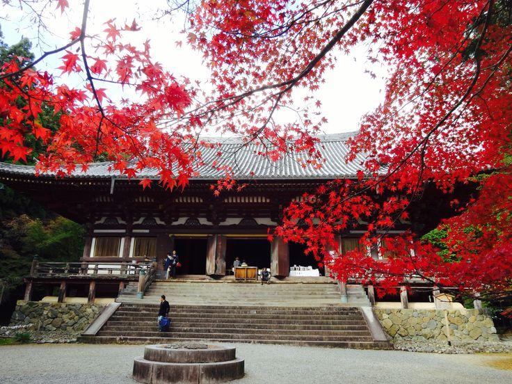 神護寺 - Jingoji Temple
