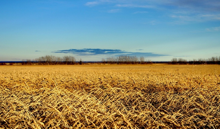Acrostic Poem: Autumn in Northern Alberta's Peace River Country
