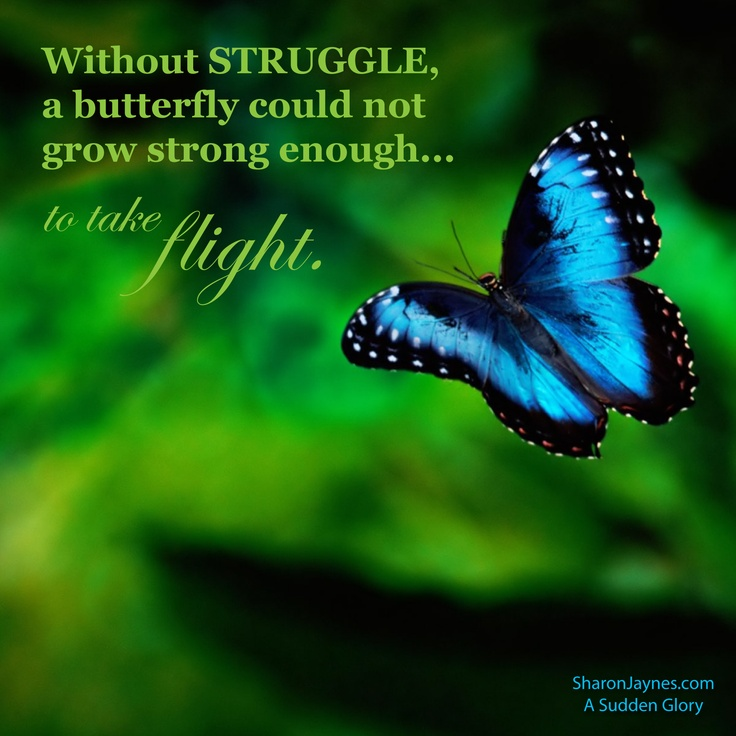 Spiritual Butterfly Quotes: 90 Best CEW Images On Pinterest