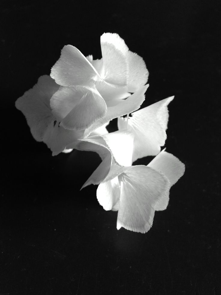 #thepiophotography© #wood #sculpture #arty #piotjieart #blackandwhite #dream #blossom #life #love #new