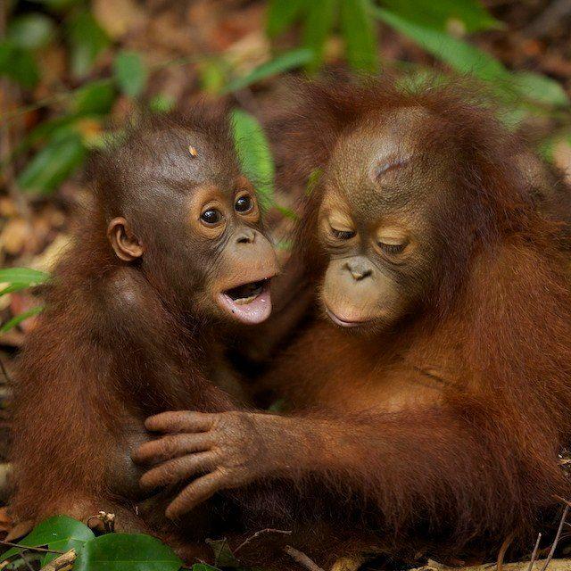 589 Best Monkeys Monkeys Everywhere Images On Pinterest