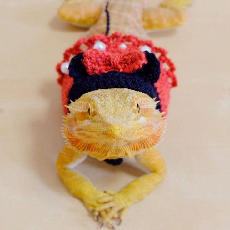 """Olá mundo! Hoje o #diadafofura apresenta Konbu (@ericianpagu), um dragão-barbudo que vive junto com seus amigos sapos, tartarugas e esquilos-voadores. Embora normalmente ele seja muito ativo, quando alguém lhe aponta a câmera fica imóvel e olha com uma expressão que parece dizer: """"Me faça parecer bonito!"""" Siga @ericianpagu para ver mais fotos e vídeos do Konbu! Seu bicho de estimação está no Instagram? Use a hashtag #diadafofura e ele pode aparecer aqui no @instagrambrasil! Foto de…"""