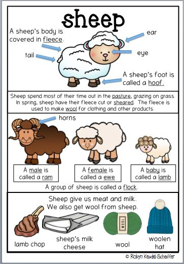 This sheep themed pack is great to go with a farm theme scheme of work.  It is a collection of worksheets and activities.  Included in this pack Poster Printables linked to the poster Comprehension, spelling words, parts of speech worksheets, mathematics worksheets including graph work and so much more. #farmtheme #sheep #commoncorestandards #poster #worksheets #printables #ela #mathematics #grade2 #grade 3