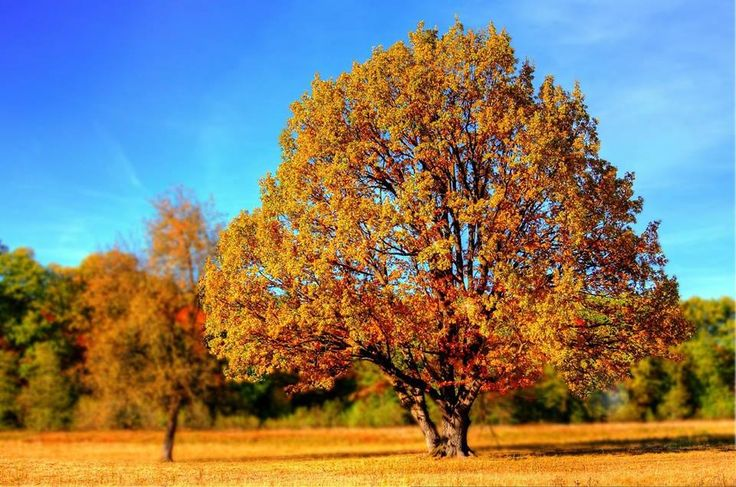 HYPOXI-Tipp zum Wochenende:  Macht mal wieder einen schönen Herbstspaziergang! Euer Körper wird es Euch danken. Ihr werdet Schritt für Schritt gesünder und senkt das Risiko für viele Krankheiten wie Diabetes 2, Osteoporose, erhöhter Blutdruck u.v.m.  Hier verbessert Ihr Euren allgemeinen Gesundheitszustand - die gezielte Figurformung erfolgt dann im HYPOXI-Studio.  Sendet uns Eure schönsten Herbstbilder in den Kommentaren! Ist vielleicht schon der Winter eingekehrt? Wir sind gespannt...