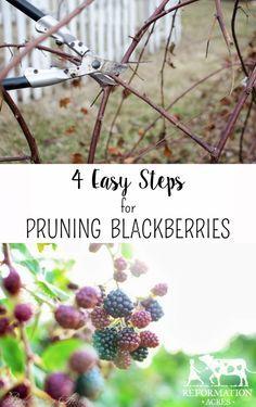 How to Prune Blackberries in 4 Easy Steps!