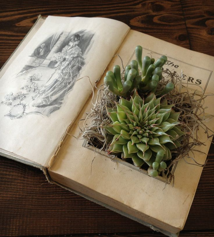 succulents decorated in an old book