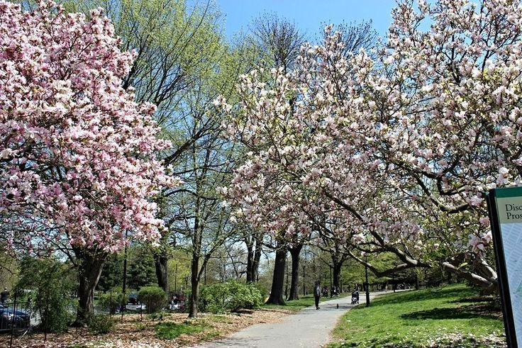 весна в гордском саду