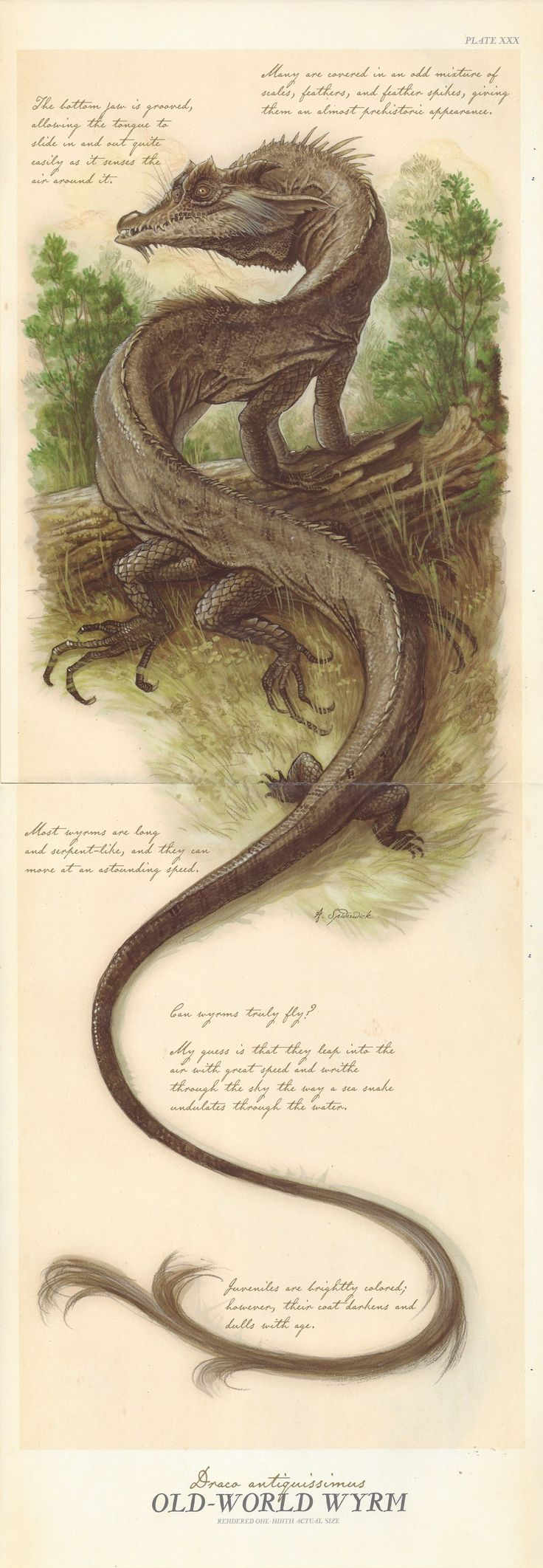 Formidable predators, dragons(also known as wyrms and drakes) are massive in size with fearsome teeth, deadly breath, vicious claws, and hides like stone. Dragons generally make their home in caves and mountains, far from humankind, but when they come close to people, their huge appetite is generally a source of conflict.