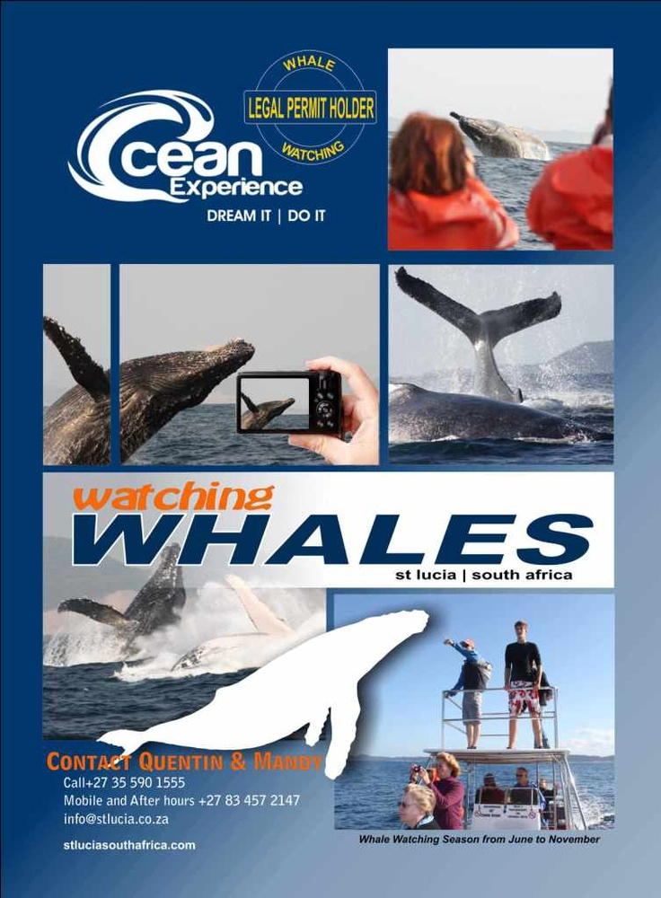 Ocean Experience Whale Watching St Lucia iSimangaliso join us for a whale of a time to witness the mighty Humpback whale June - December 0355901555