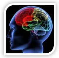 Pós-Graduação em Neuropsicologia Clínica DESTINATÁRIOS: Psicólogos, enfermeiros, médicos e terapeutas (fisioterapeutas, terapeutas da fala e terapeutas ocupacionais), gerontólogos e outras formações académicas relacionadas com as áreas da saúde, neurociências, biologia e ciências do comportamento. + Inf: http://www.cognos.com.pt/c_neuropsicologia.html