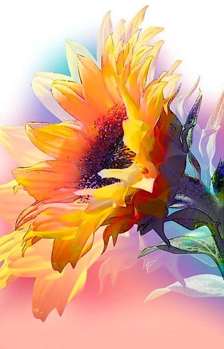 Pretty sunflower painting inspiration, would be lovely watercolor, acrylic or oil painting.