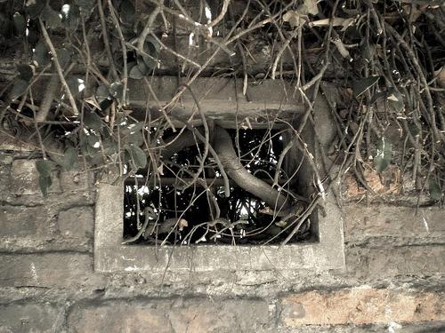 ventana_selva by las ventanas del bella, via Flickr