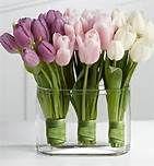 wedding tulips - Bing Images