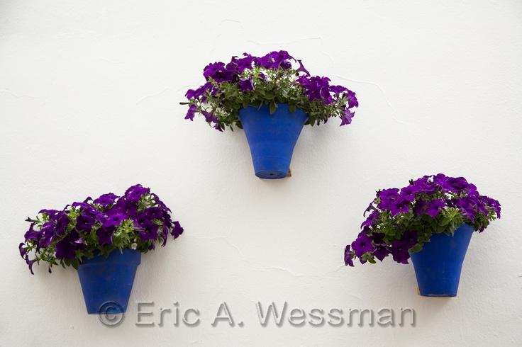 Purple Flowers, Blue Pots, White Wall