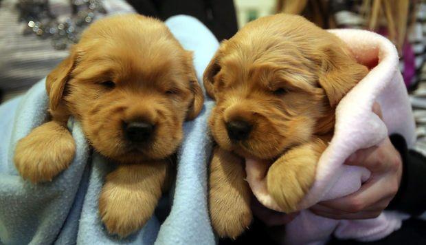 Adorable - Next generation of Trenton Thunder's bat dog is born