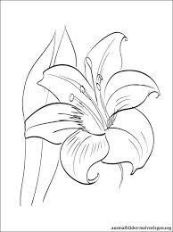 Bildergebnis Für Ausmalbilder Blumen Beton Pinterest Blumen