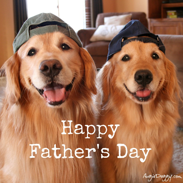 Happy Father's Day! (With images) Golden retriever